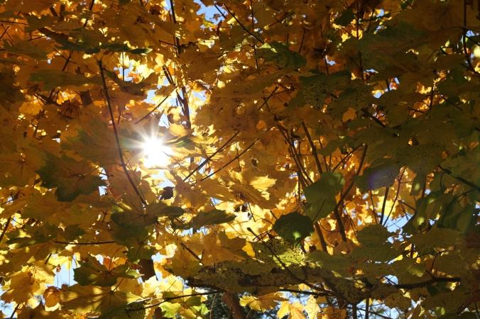 sol bakom träd